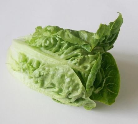 salat_02_dauni.jpg