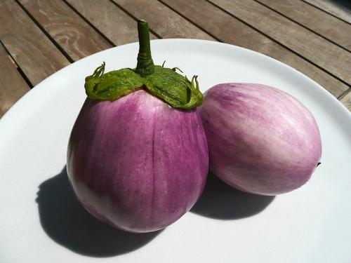 auberginen-rosa-01_lebenslang_hg-kopie.jpg