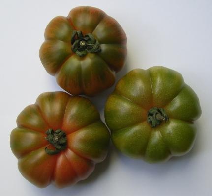 gruene_tomaten_01_bstumpf.jpg
