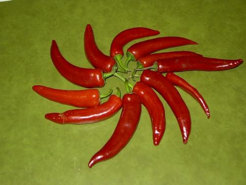 pepperoni_01_madame.jpg