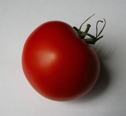 tomate_02_sister.jpg