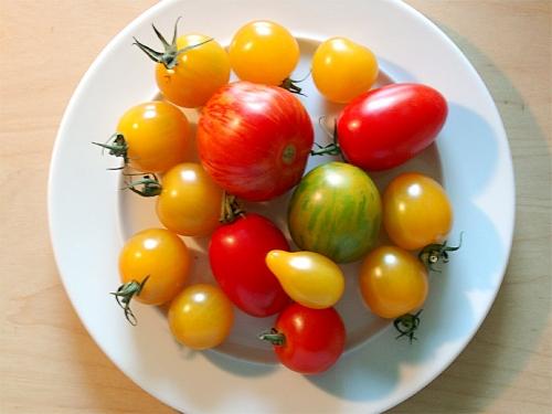 tomaten_001_missfits.jpg