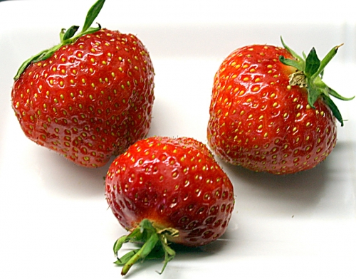 erdbeeren_01_dauni.jpg