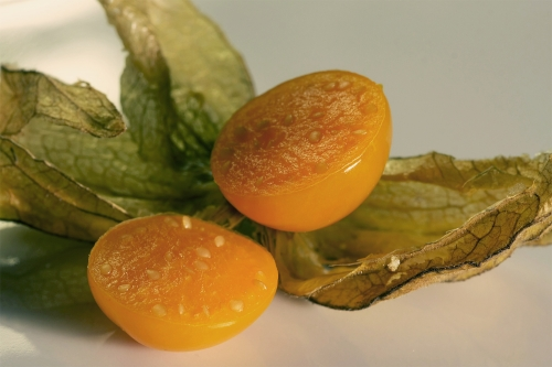 physalis-02_hg_lebenslang