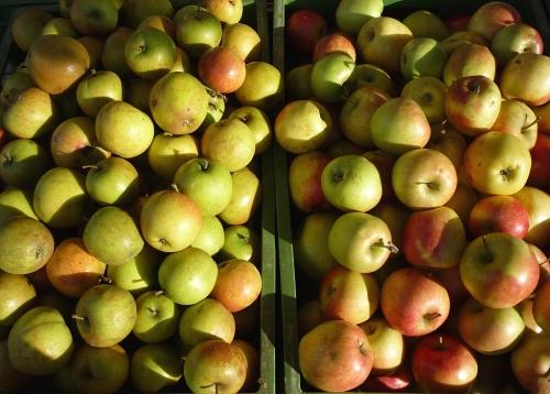 Äpfel, Erzeugermarkt