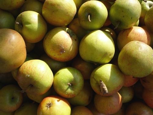 Äpfel, Erzeugermarkt - 2
