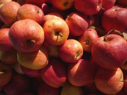 Äpfel, Erzeugermarkt - 3
