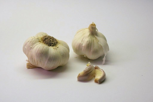 knoblauch_01_dauni.jpg